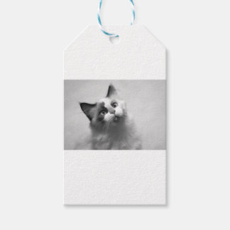 Black And White Kitten Portrait Gift Tags