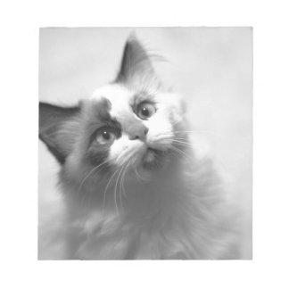 Black And White Kitten Portrait Notepad