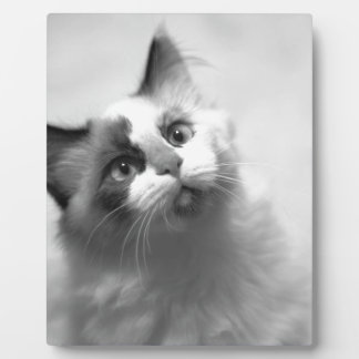 Black And White Kitten Portrait Plaque