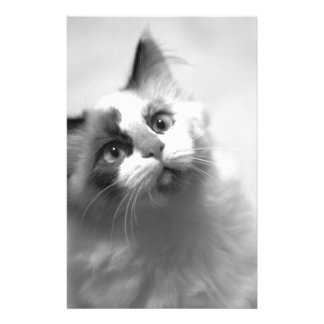Black And White Kitten Portrait Stationery