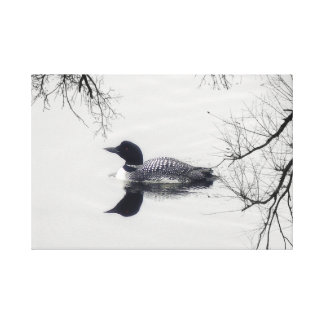 Black and white loon on a lake  art canvas