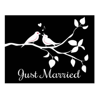 Black and White Lovebirds Just Married Wedding Postcard
