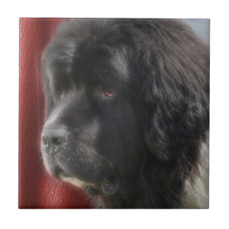 Black And White Newfoundland Dog Tile
