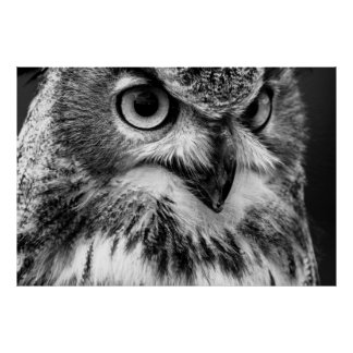 Black and White Owl Portrait Poster