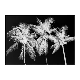 Black and white palm tree tropical summer acrylic print