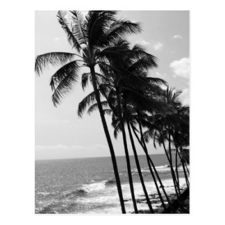 Black and White Palm Trees Postcard