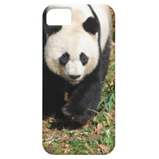 Black and White Panda iPhone 5 Cover