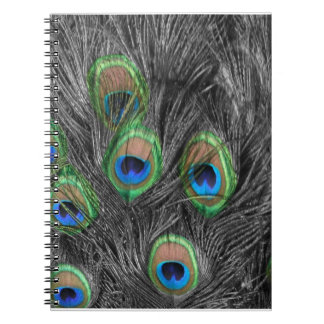 Black and White Peacock Feather Notebook