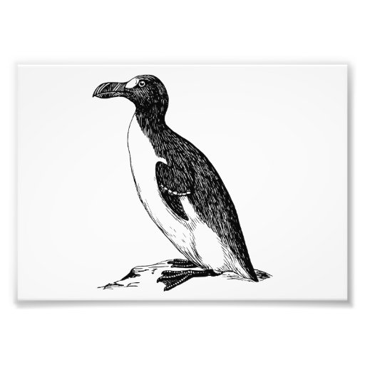 Black and White Penguin Bird Art Photograph