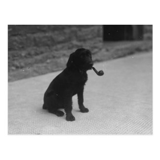 Black and White Photo Dog Smoking Pipe Postcard