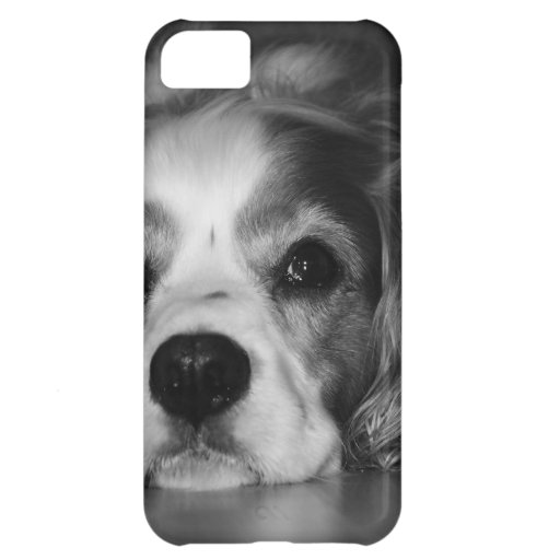 Black and white photo of dog iPhone 5C cases