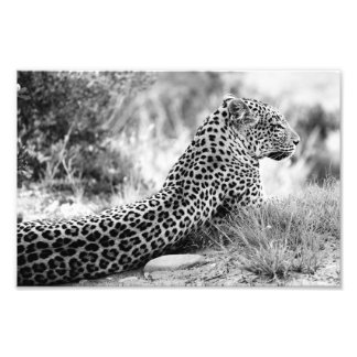 Black and White photo of Leopard looking