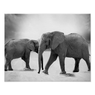 Black and White Photograph of African Elephants Poster