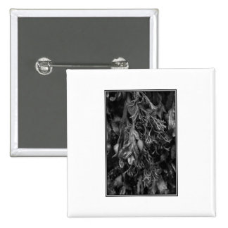 Black and White Picture of Seaweed. Pinback Button