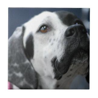 Black and White Pointer Dog Tile