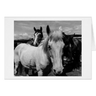 Black and White Ponies Card
