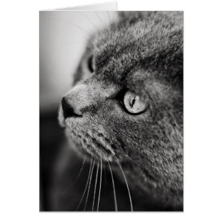Black and white portrait of a cat - card