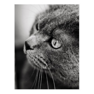 Black and white portrait of a cat - postcard