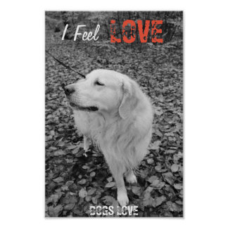 Black and white Poster Paper with Golden Retriever