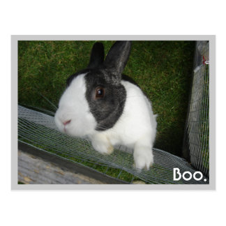 Black and white Rabbit Postcard