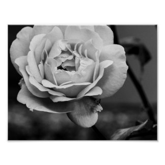 Black and White Romantic Rose Poster