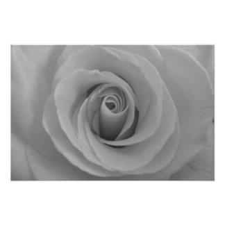 Black and White Rose Poster