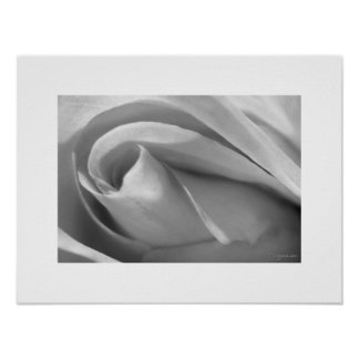 Black and White Rose Poster Poster Print