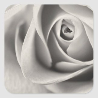 Black and White Rose, stationery, template Square Sticker