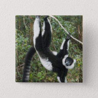 Black and White Ruffed Lemur, (Varecia 2 Inch Square Button