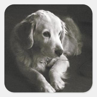 Black and White Sad Dog | Sticker Seal