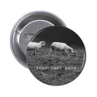 Black and White Sheep In A Pasture Photo 2 Inch Round Button