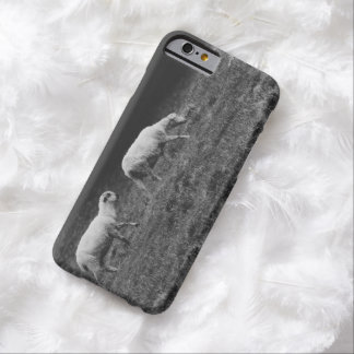 Black and White Sheep In A Pasture Photo Barely There iPhone 6 Case