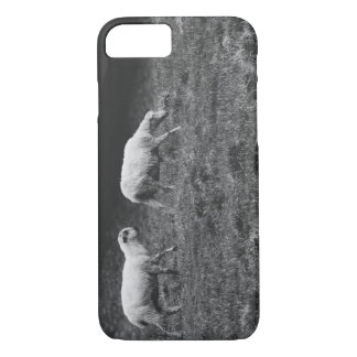 Black and White Sheep In A Pasture Photo iPhone 7 Case
