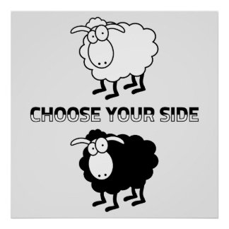 Black and white sheep poster