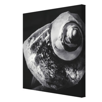 Black and White Shell Wrapped Canvas
