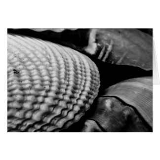 Black and White Shells blank Greeting Card