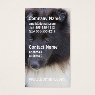 Black and White Sheltie Business Card