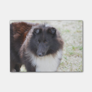 Black and White Sheltie Post-it® Notes
