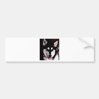 Black and white smiling Alaskan Malamute Bumper Sticker