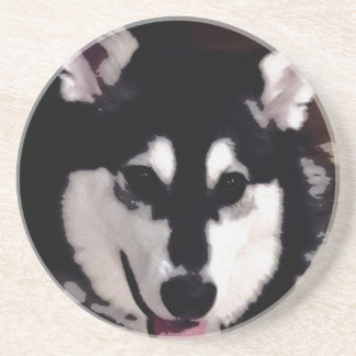 Black and white smiling Alaskan Malamute Coaster