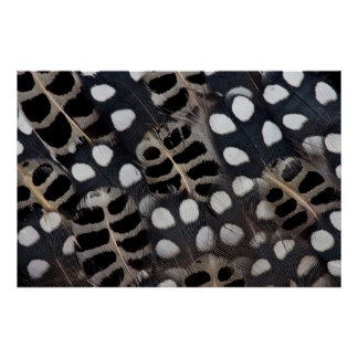 Black And White Spotted Feathers Poster