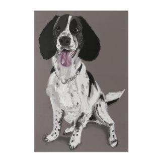 Black and White Springer Spaniel Acrylic Print