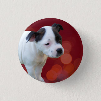 Black And White Staffy Puppy, Button Badge.