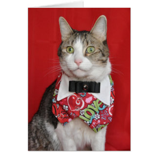 Black and white tabby dressed for Valentine's Day Card