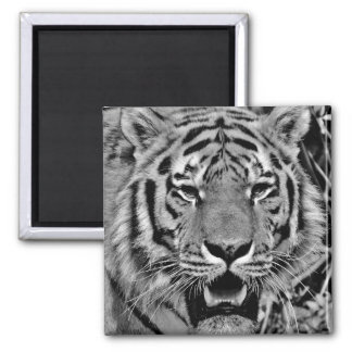 Black and White Tiger Face Magnet