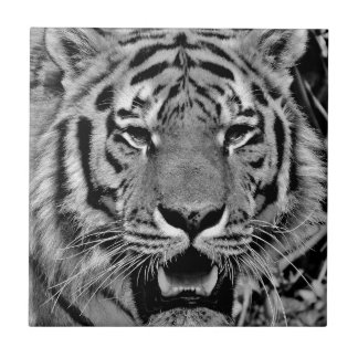 Black and White Tiger Face Tiles