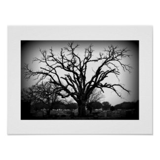black and white tree in cemetery poster