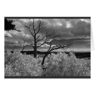 Black and white tree landscape card