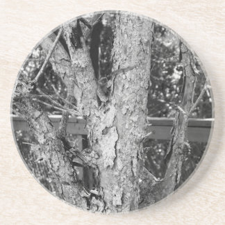 Black and White Tree Nature Photo Coaster