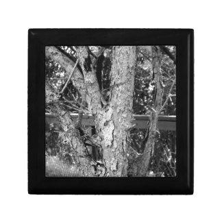Black and White Tree Nature Photo Gift Box